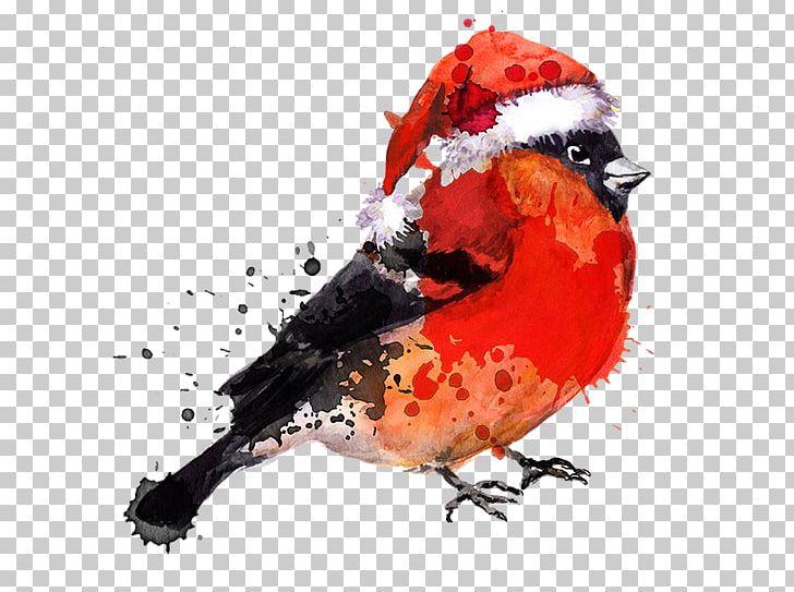 Bird Watercolor Painting Drawing PNG, Clipart, Animals, Beak, Bird, Bullfinch, Cardinal Free PNG Download