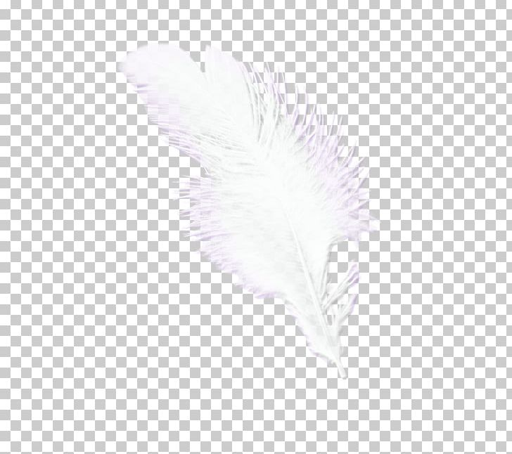 Feather Pattern PNG, Clipart, Animals, Beautiful, Beautiful Feathers, Bird, Feather Free PNG Download