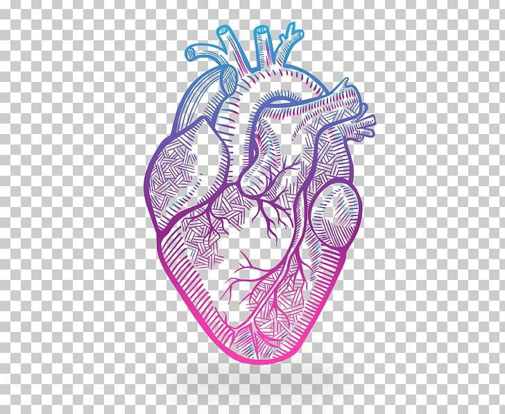 Heart Anatomy Drawing PNG, Clipart, Anatomy, Art, Biology ...
