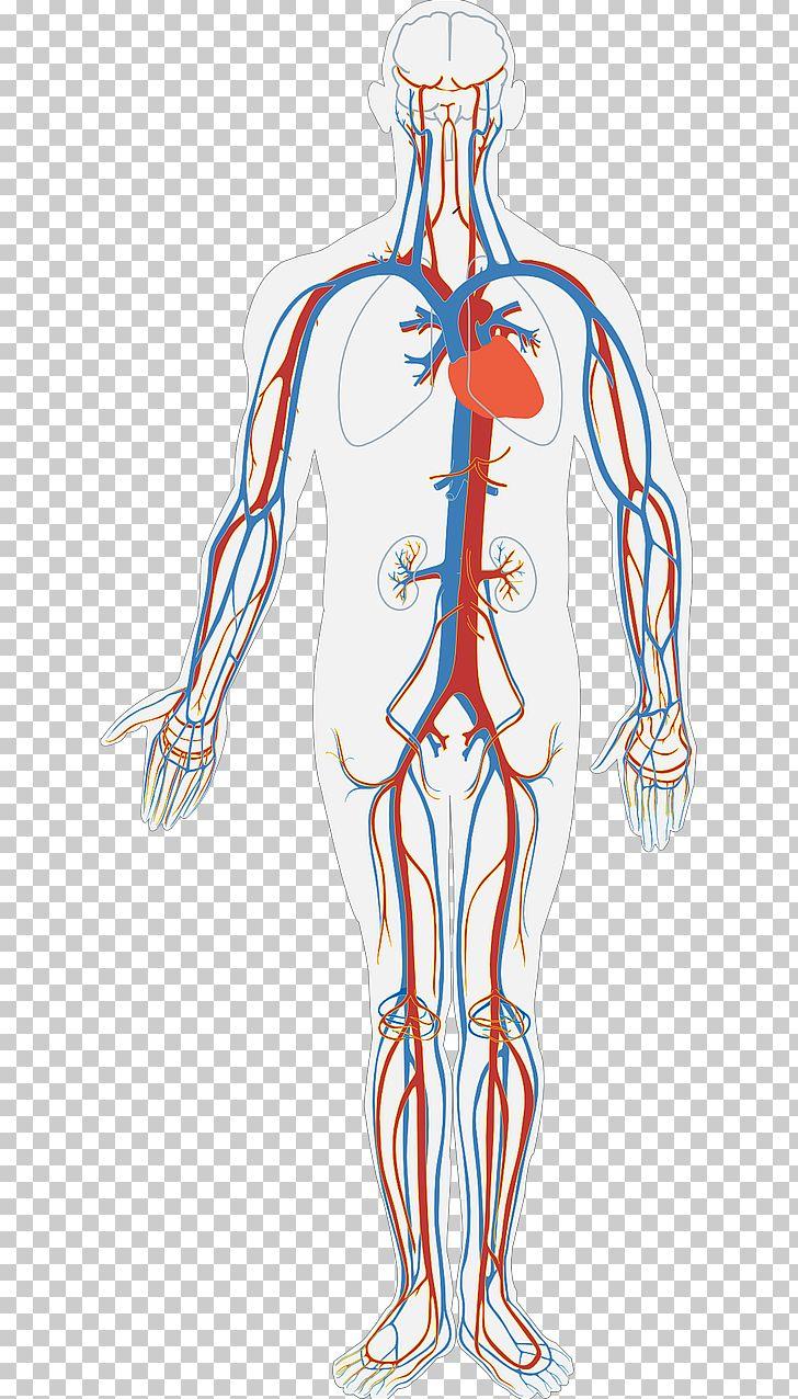 Circulatory System Diagram Human Body Anatomy Organ System Png Clipart Arm Art Blood Blood Bag Blood