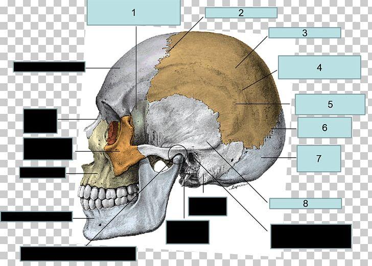 Parietal Bone Frontal Bone Sphenoid Bone Skull PNG, Clipart, Anatomy, Bone, Brain, Diagram, Ear Free PNG Download