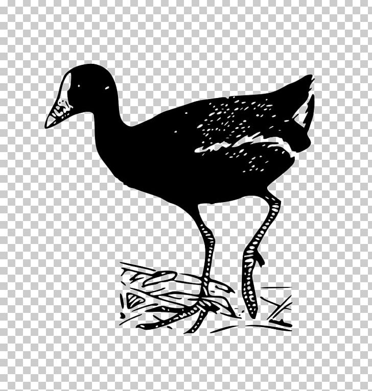 Bird Line Art PNG, Clipart, Animals, Beak, Bird, Black And White, Clip Free PNG Download