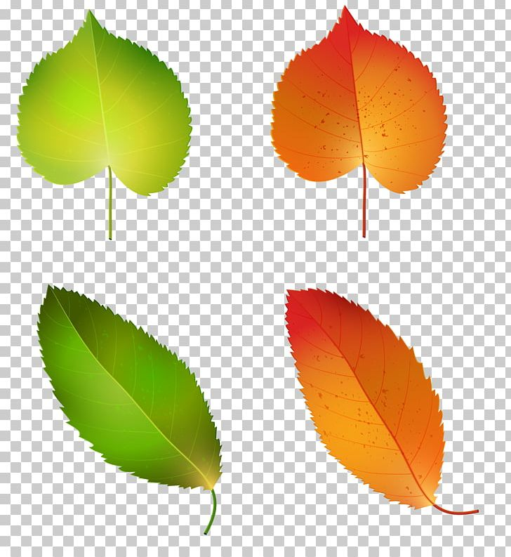 Autumn Leaf Color Green Yellow PNG, Clipart, Autumn, Autumn Leaf Color, Autumn Leaves, Flower, Green Free PNG Download