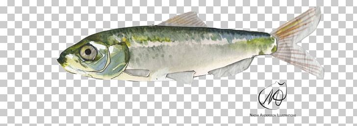 Sardine Herring Perch Oily Fish Fish Products PNG, Clipart, Anchovy, Animal Figure, Animals, Atlantic Herring, Atlantic Mackerel Free PNG Download