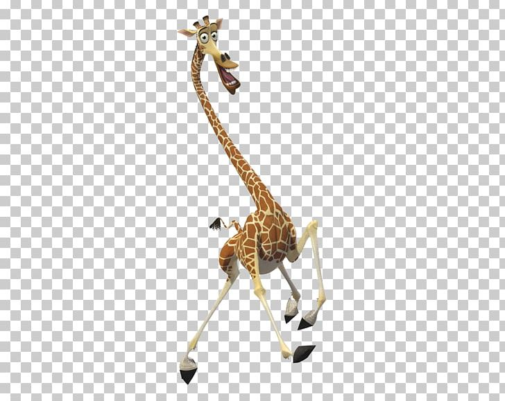 Melman Gloria Alex Madagascar DreamWorks Animation PNG
