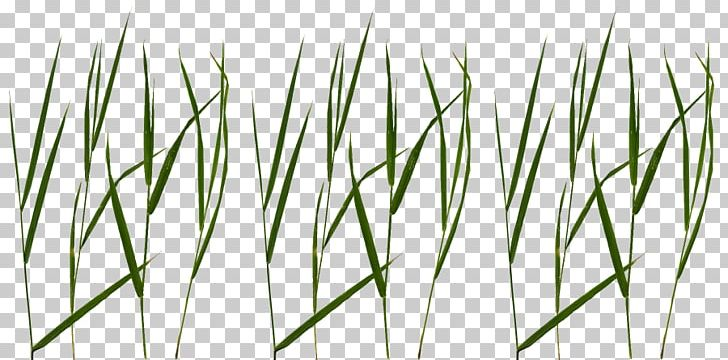 Blade Lawn Portable Network Graphics Texture Mapping PNG, Clipart, Blade, Chrysopogon Zizanioides, Commodity, Computer Icons, Cutting Free PNG Download