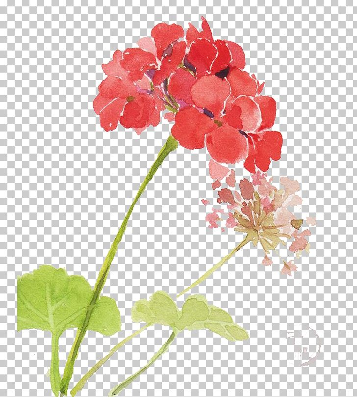 Watercolor Flowers PNG, Clipart, Annual Plant, Branch, Cartoon, Color, Flower Free PNG Download