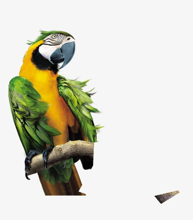 Parrot PNG, Clipart, Animal, Bird, Green, Green Parrot, Parrot Free PNG Download