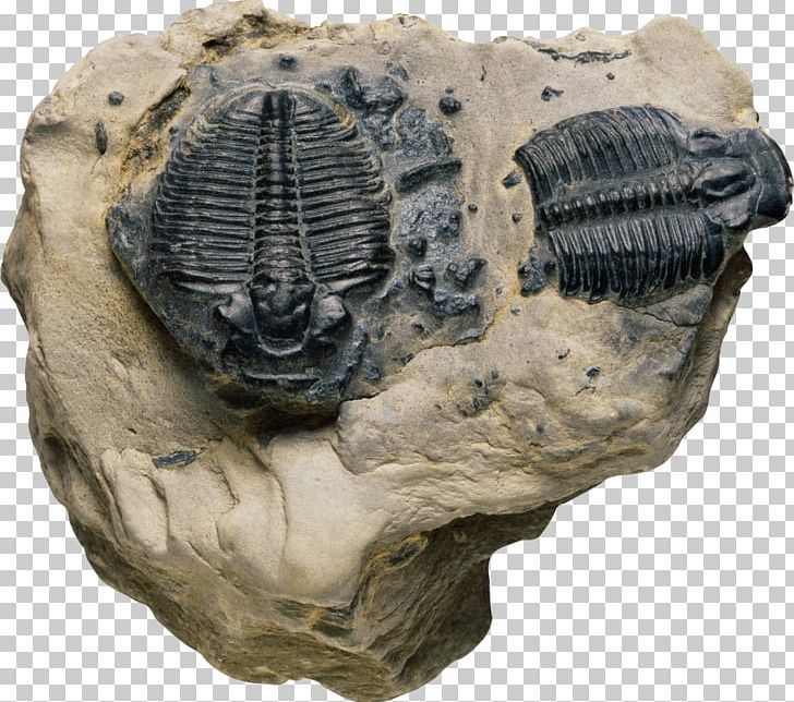 how is relative dating using index fossils different from absolute dating