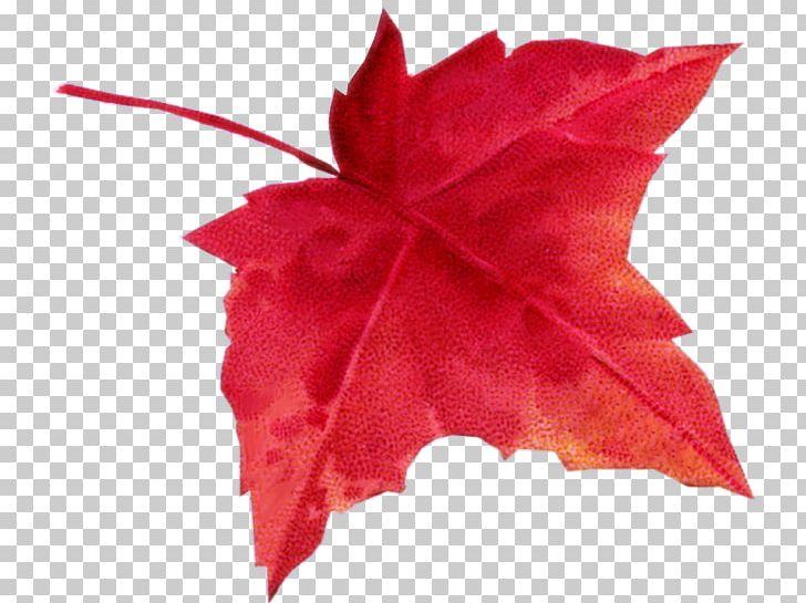 Maple Leaf Autumn Leaf Color PNG, Clipart, Autumn, Autumn Leaf Color, Deciduous, Encapsulated Postscript, Flower Free PNG Download