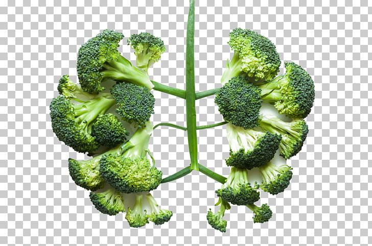 Lung Health Vegetable Broccoli Disease PNG, Clipart