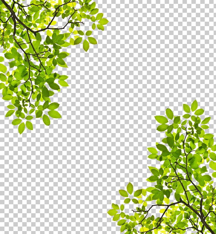 Tree Branch Leaf Trunk Stock Photography PNG, Clipart, Alstonia Scholaris, Area, Birch, Branch, Christmas Tree Free PNG Download