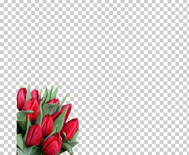 8 March International Women's Day Flower ZieduVeikals.lv Holiday PNG, Clipart, 8 March, 2017, Bud, Cut Flowers, Floral Design Free PNG Download