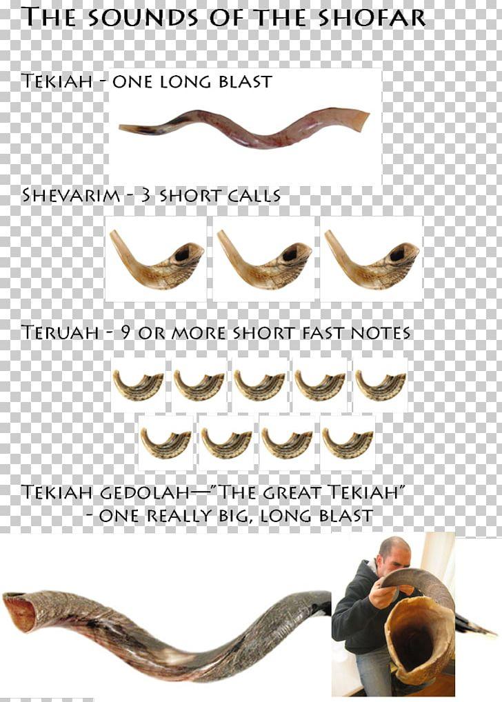 Messianic Judaism Shofar Jewish People Jewish Holiday PNG, Clipart, Body Jewelry, Hebrews, High Holy Days, Jewish Holiday, Jewish People Free PNG Download
