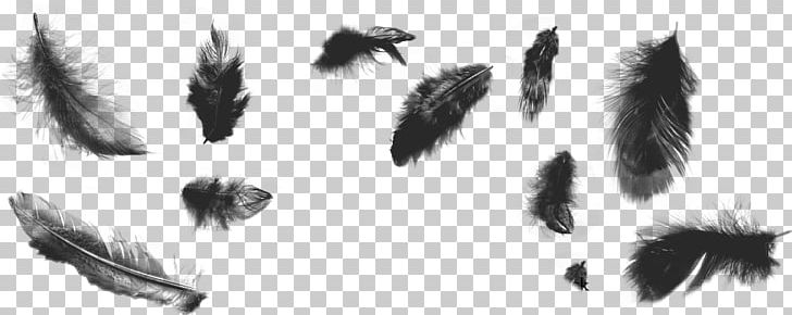 Feather Brush Bird Illustrator PNG, Clipart, Angle, Animals, Art, Bird, Black And White Free PNG Download