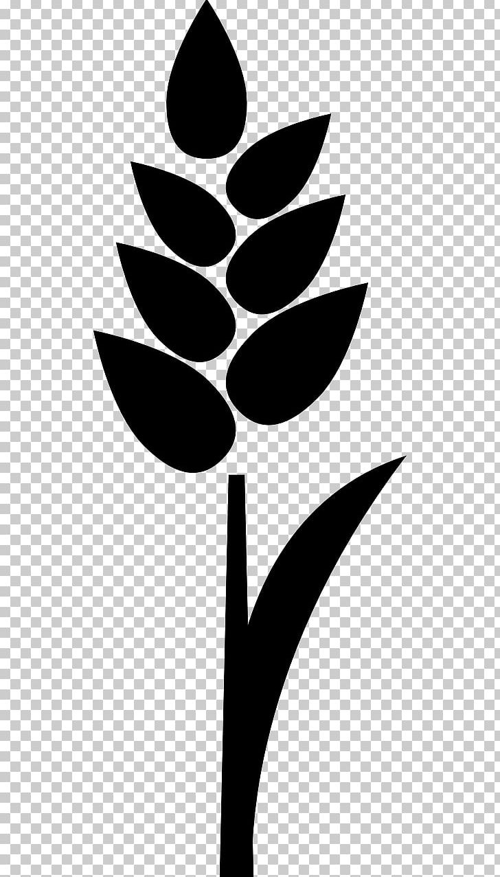 Wheat Cereal Grain Rice PNG, Clipart, Barley Grass, Black And White, Branch, Cereal, Cereal Germ Free PNG Download