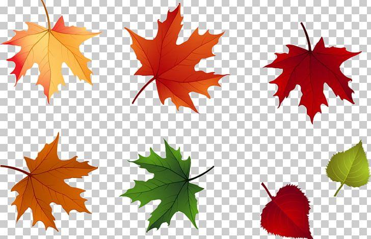 Maple Leaf Autumn Leaflet PNG, Clipart, Abscission, Autumn, Autumn Leaf Color, Autumn Leaves, Branch Free PNG Download
