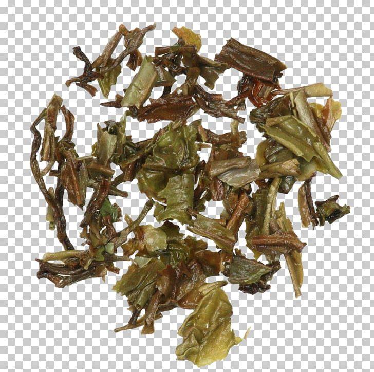 Nilgiri Tea Hōjicha Tea Plant PNG, Clipart, Bai Mudan, Bancha, Da Hong Pao, Darjeeling Tea, Dianhong Free PNG Download