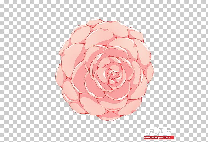 Garden Roses Cabbage Rose Flower Petal Pink M PNG, Clipart, Artificial Flower, Call Center, Cut Flowers, Flower, Flowering Plant Free PNG Download