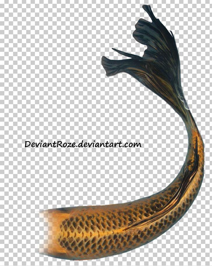 3d66340bb628b Taisho Sanshoku Butterfly Koi Goldfish Tail PNG, Clipart, Aquarium, Butterfly  Koi, Carp, Deviantart, Fantasy Free PNG Download