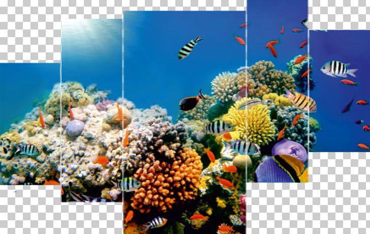 Coral Reef Desktop Underwater Sea Ocean PNG, Clipart, 1080p, Aquarium, Aquarium Decor, Computer Wallpaper, Coral Free PNG Download