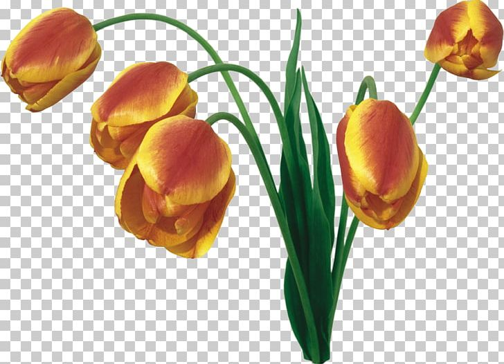 Tulip Flower Bouquet Desktop PNG, Clipart, Blume, Bud, Cut Flowers, Desktop Metaphor, Desktop Wallpaper Free PNG Download