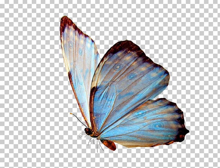 Television Brush Footed Butterfly Photography PNG, Clipart, Aesthetics, Arthropod, Brush Footed Butterfly, Butterfly, Encapsulated Postscript Free PNG Download