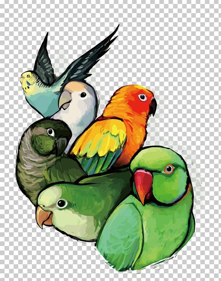 Budgerigar Lovebird Parrot PNG, Clipart, Animals, Bird, Common Pet Parakeet, Fauna, Feather Free PNG Download