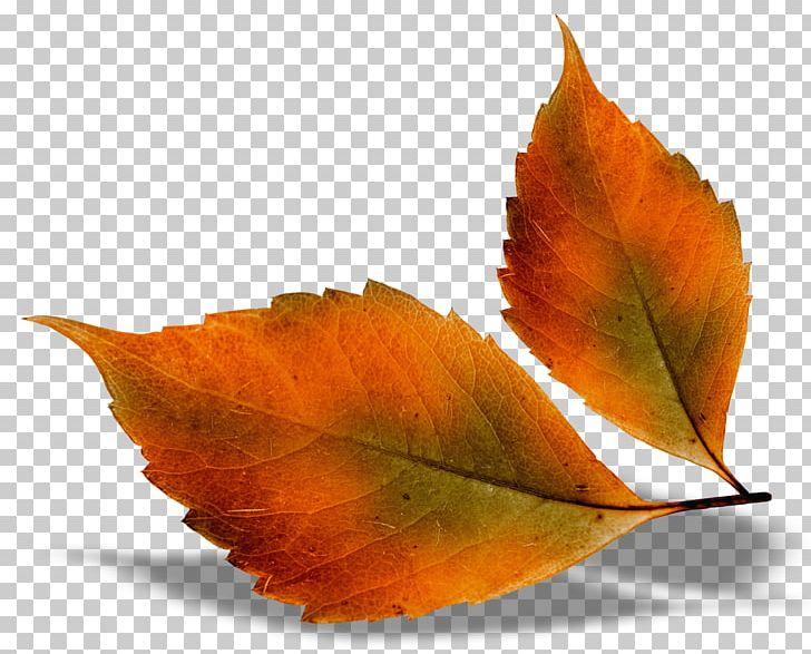 Autumn Leaf Color PNG, Clipart, Autumn, Autumn Leaf Color, Autumn Leaves, Color, Desktop Wallpaper Free PNG Download