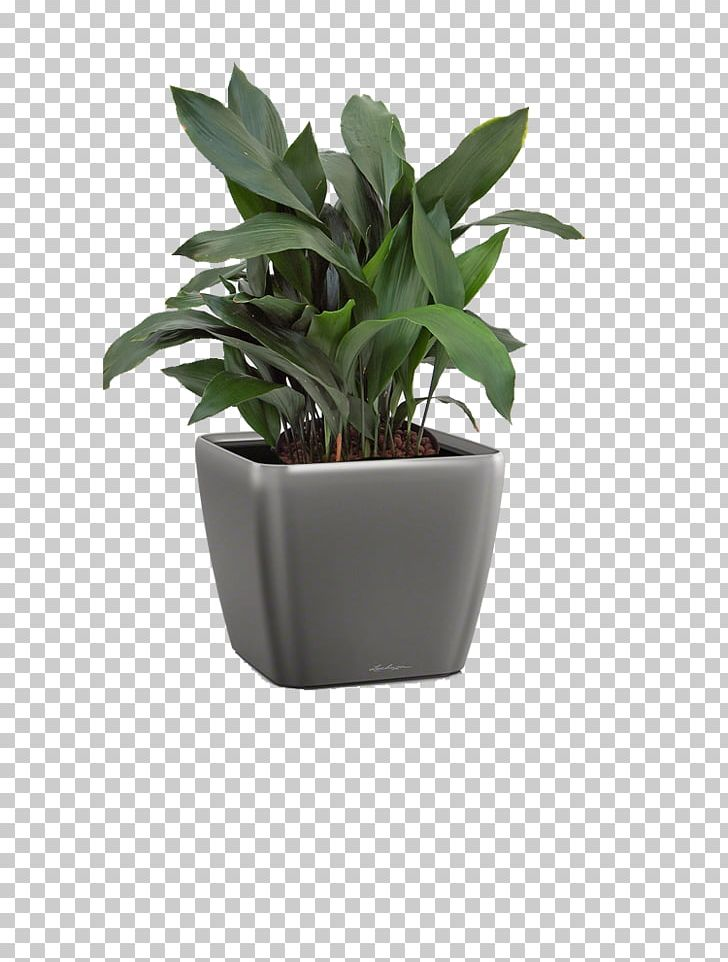 Flowerpot Leaf Houseplant Agave INAV DBX MSCI AC WORLD SF PNG, Clipart, Agave, Flowerpot, Houseplant, Hwdesign Gmbh, Inav Dbx Msci Ac World Sf Free PNG Download