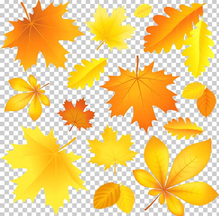 Autumn Leaf Color PNG, Clipart, Autumn, Autumn Leaf Color, Clipart, Clip Art, Fall Free PNG Download