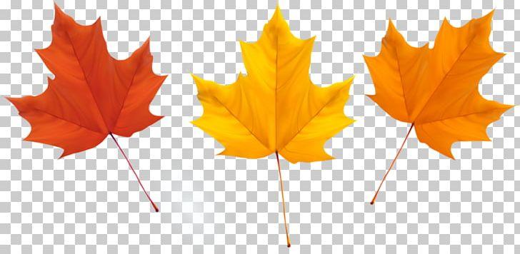 Maple Leaf Autumn Leaves PNG, Clipart, Autumn, Autumn Leaf Color, Autumn Leaves, Cari, Deciduous Free PNG Download