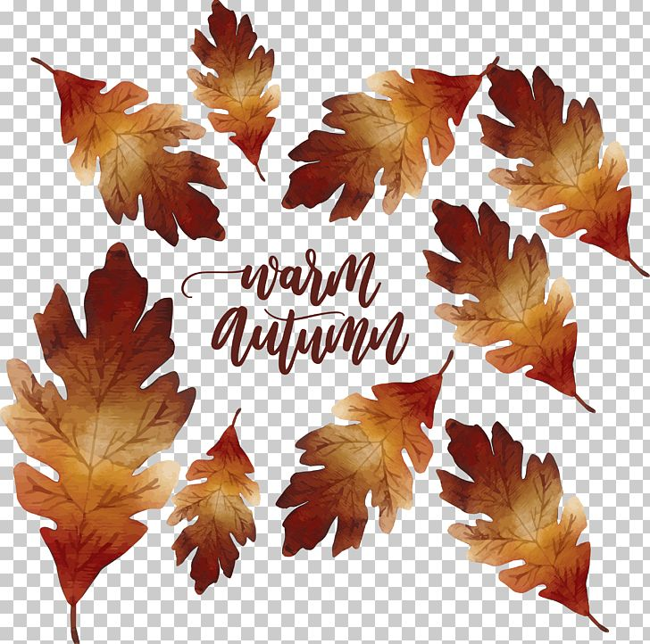 Maple Leaf Autumn Deciduous PNG, Clipart, Adobe, Autumn, Autumn Leaf Color, Autumn Tree, Autumn Vector Free PNG Download
