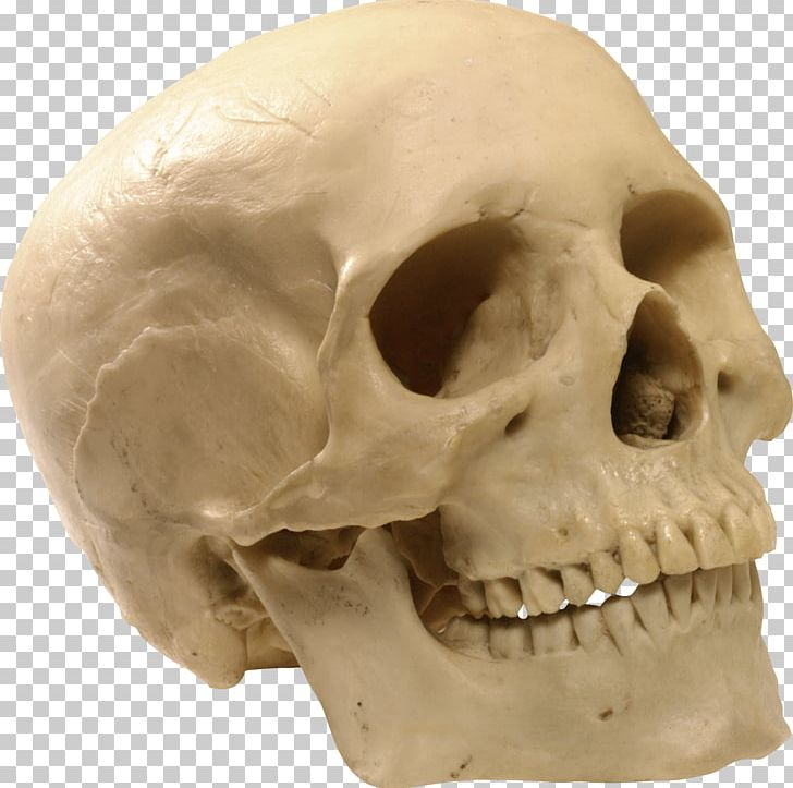Skull Computer File PNG, Clipart, Alcohol, Beautiful, Beer, Bone, Canon Free PNG Download