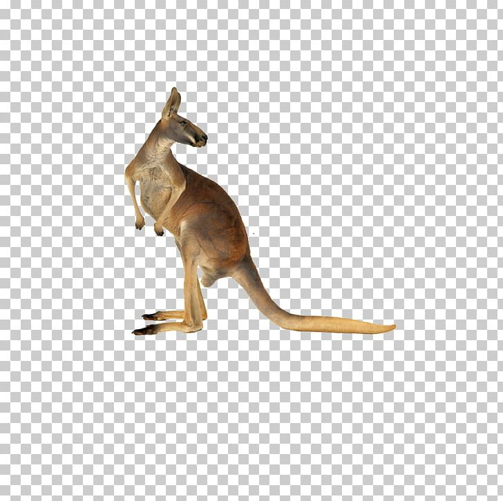 Christmas Kangaroo Cartoon.Red Kangaroo Australian English Png Clipart Animal